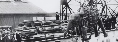 An elephant being unloaded from a boat using a net of ropes