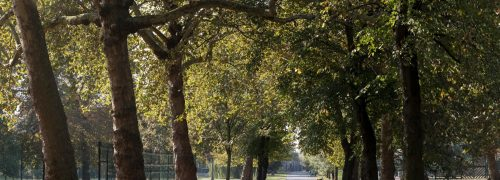 A row of trees in Royal Victoria Gardens