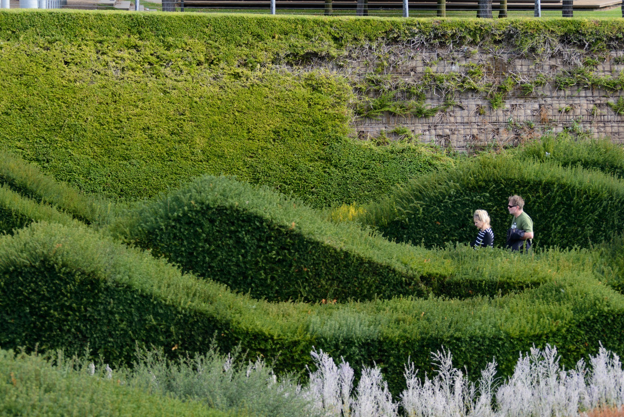 Thames Barrier Park hedges