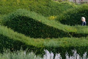 Rolling hedges of Thames Barrier Park
