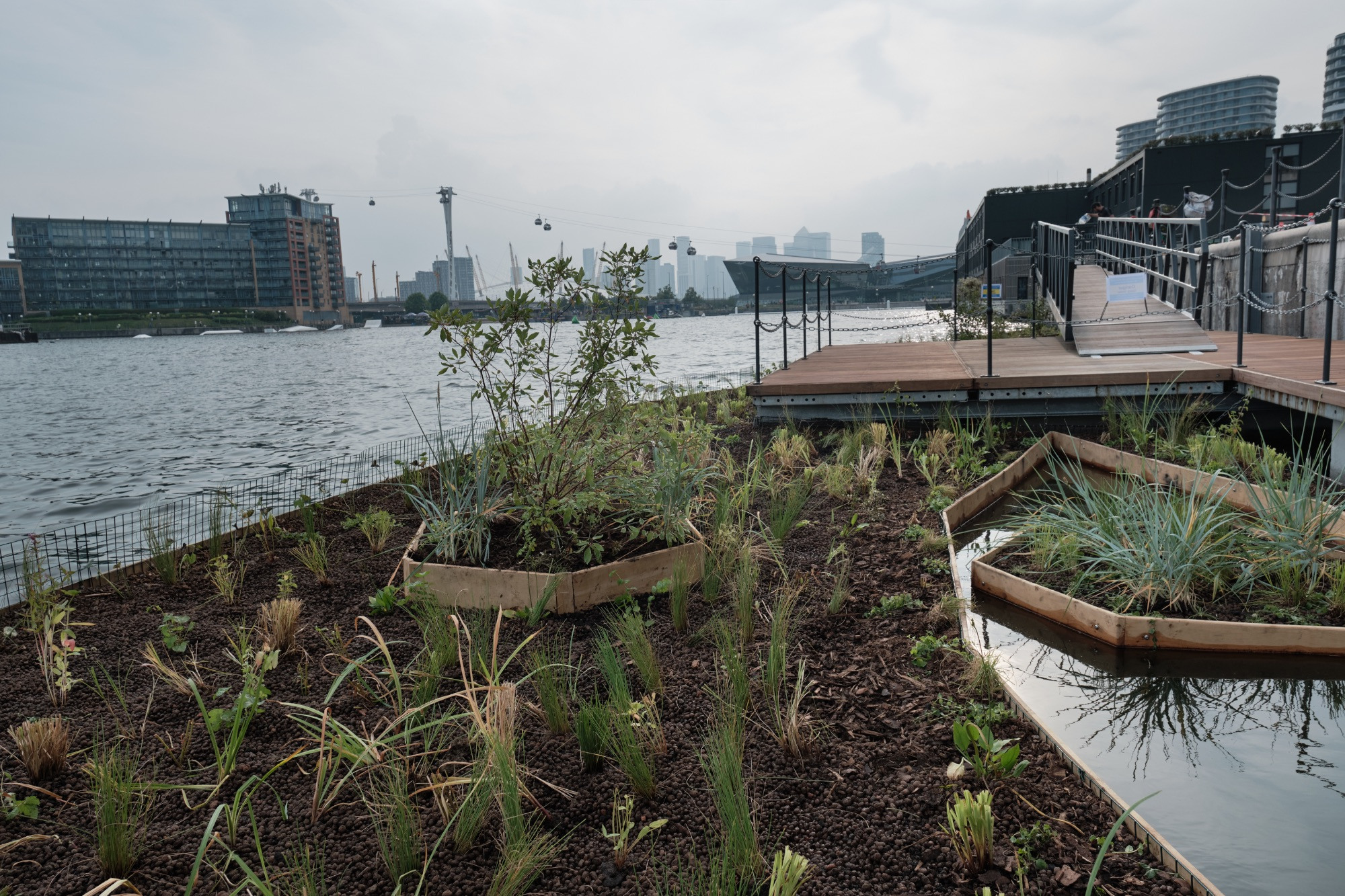Royal Docks floating garden completed, with planting, decking and a pond