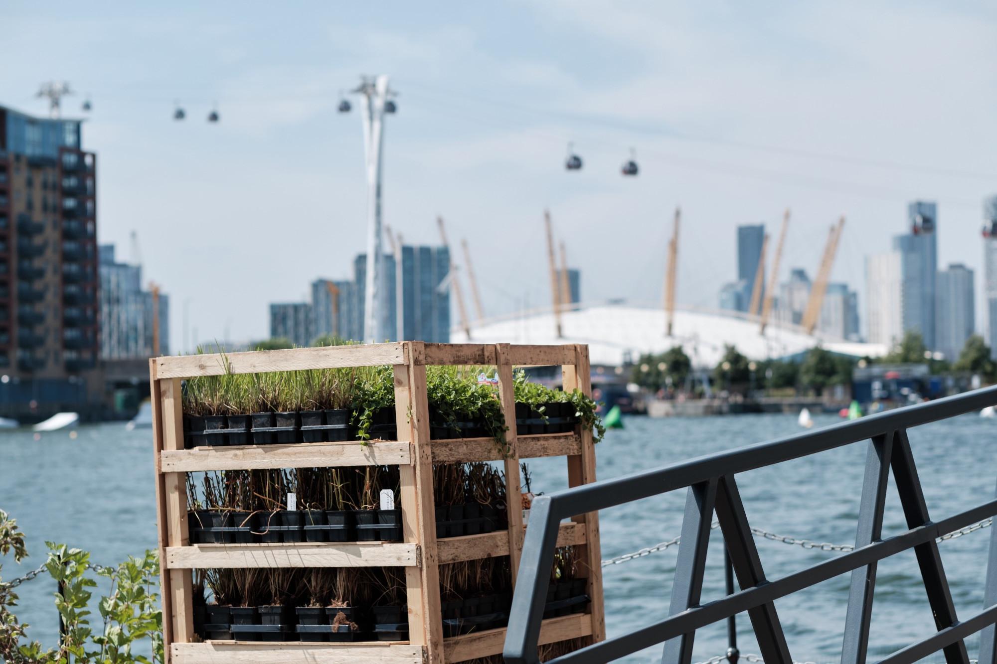 Royal Docks floating garden plants