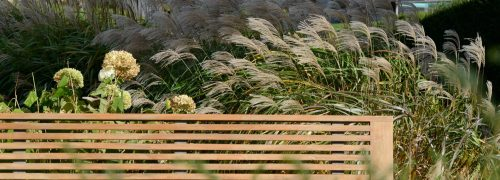 Bench with waving grasses behind it