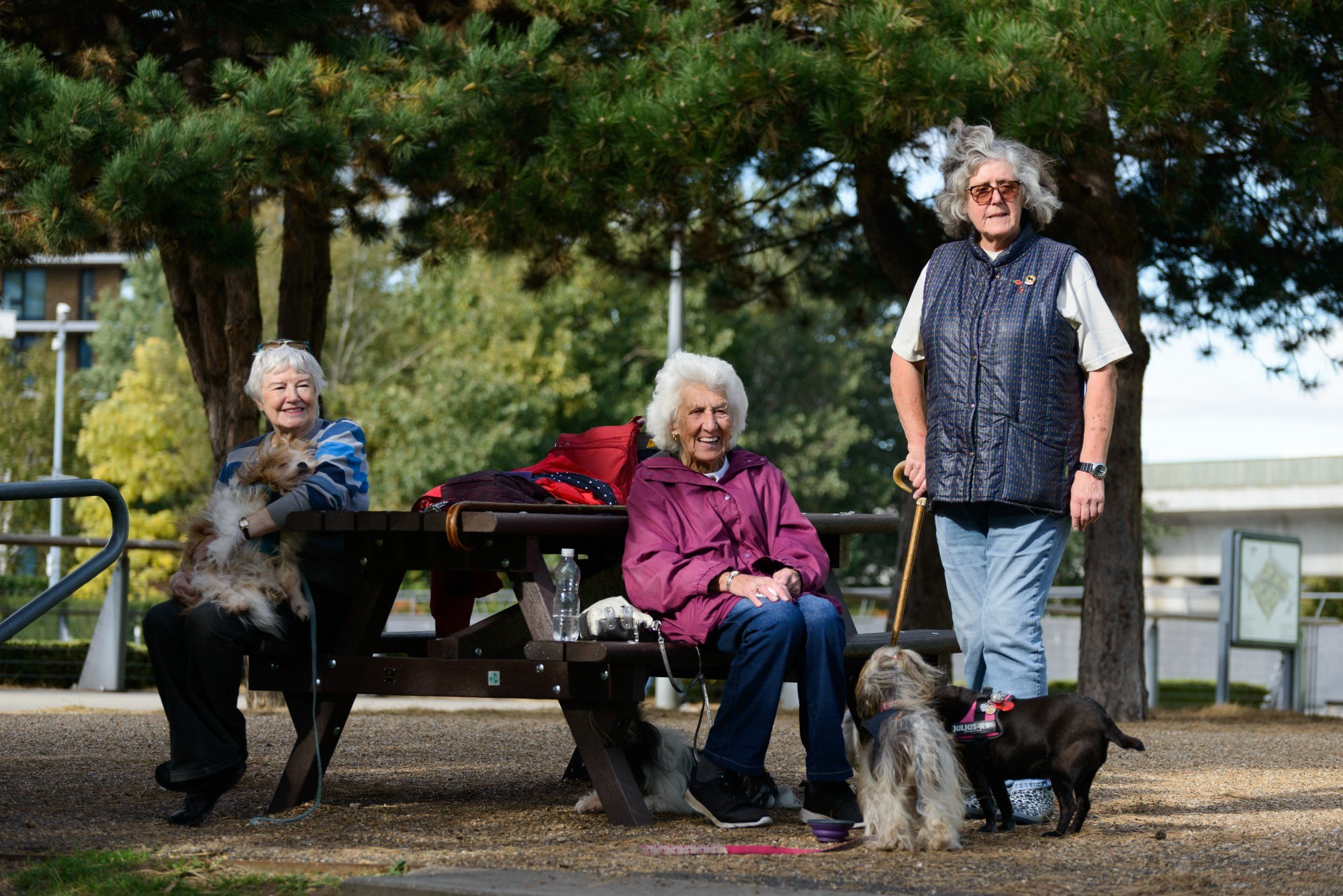 Portrait of three older women outside with dogs